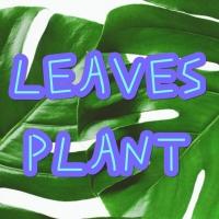 Leaves & Plant