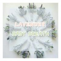 Lavender , Baby breath