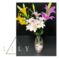 Lily , Tulip